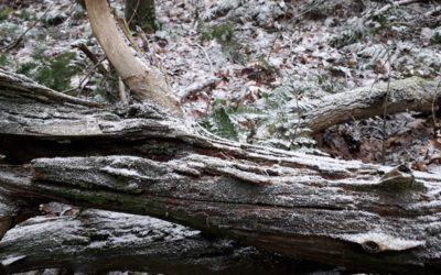 Turfje in de sneeuw