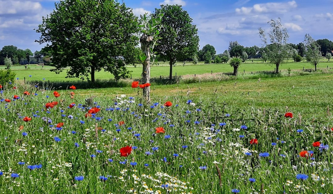 Veld vol bloemen